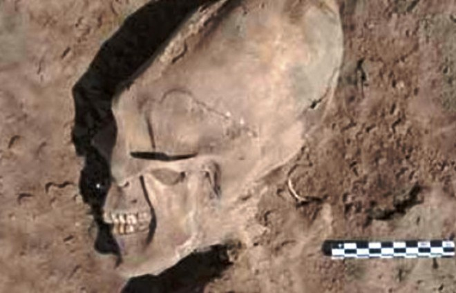 Skull which looks like Alien found in Mexico